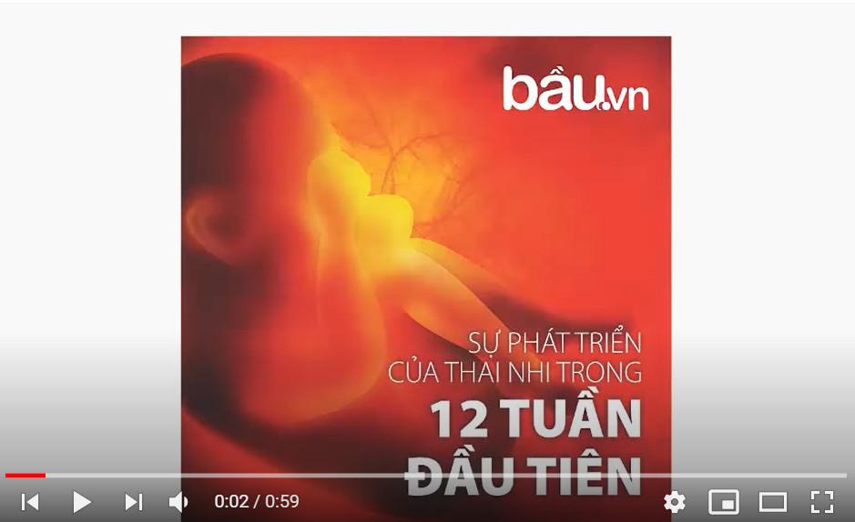 Sự phát triển của thai nhi trong 12 tuần đầu tiên