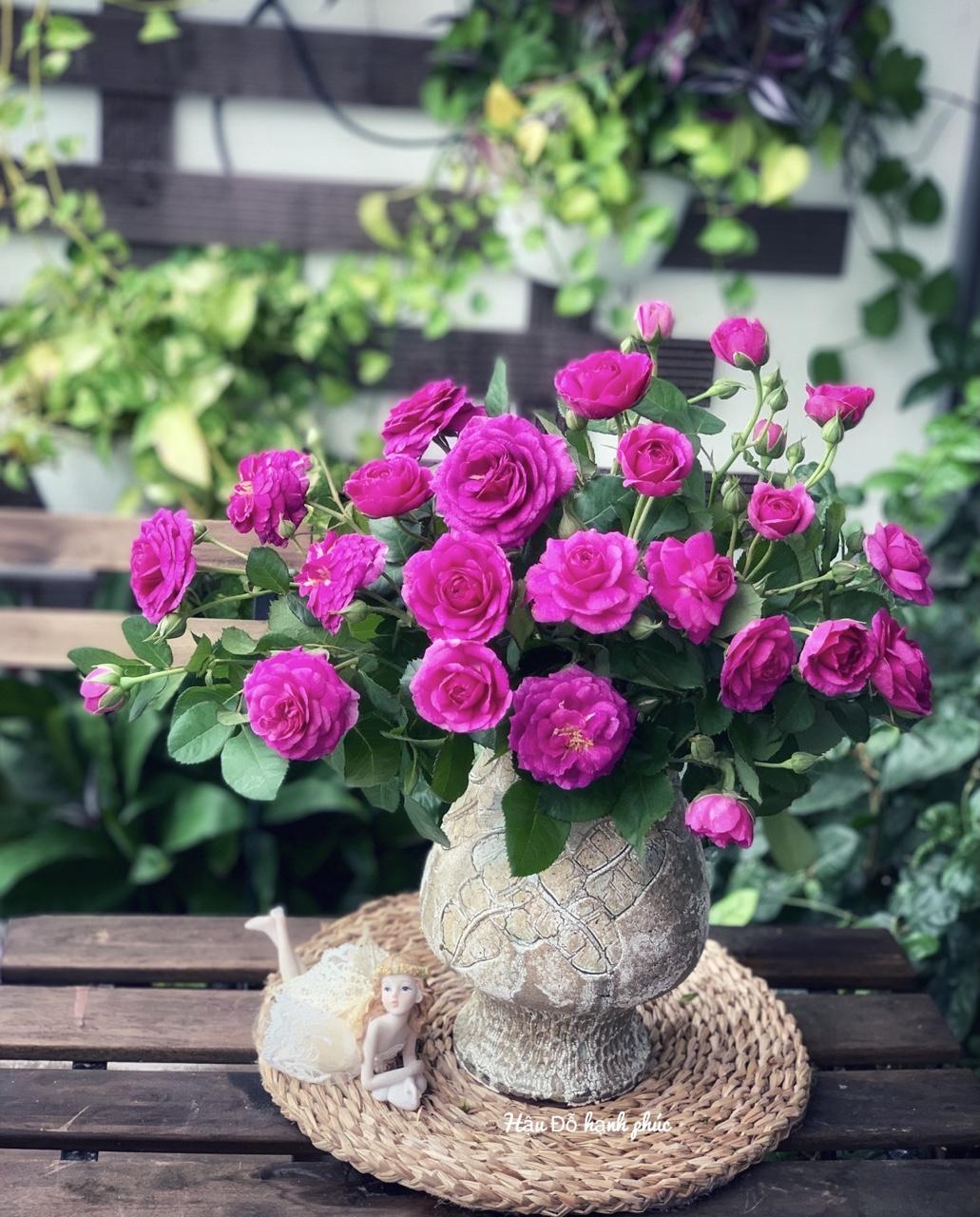 cắm hoa hồng