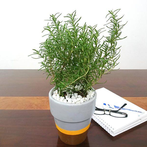 cây nên trồng trong bếp