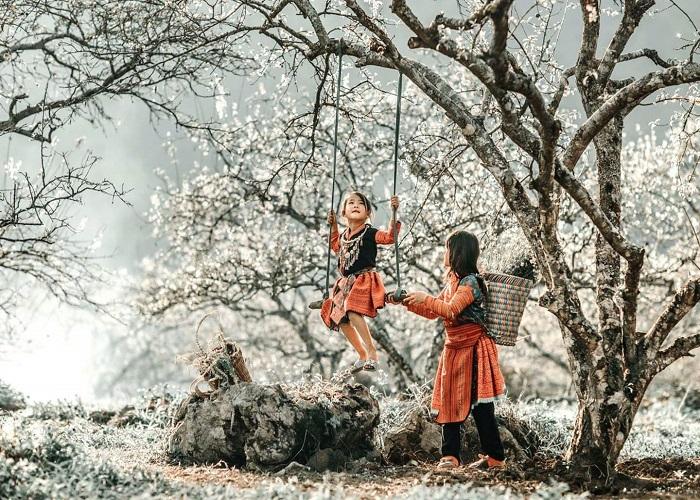 Mùa hoa mận nở rộ trên cao nguyên trắng Bắc Hà
