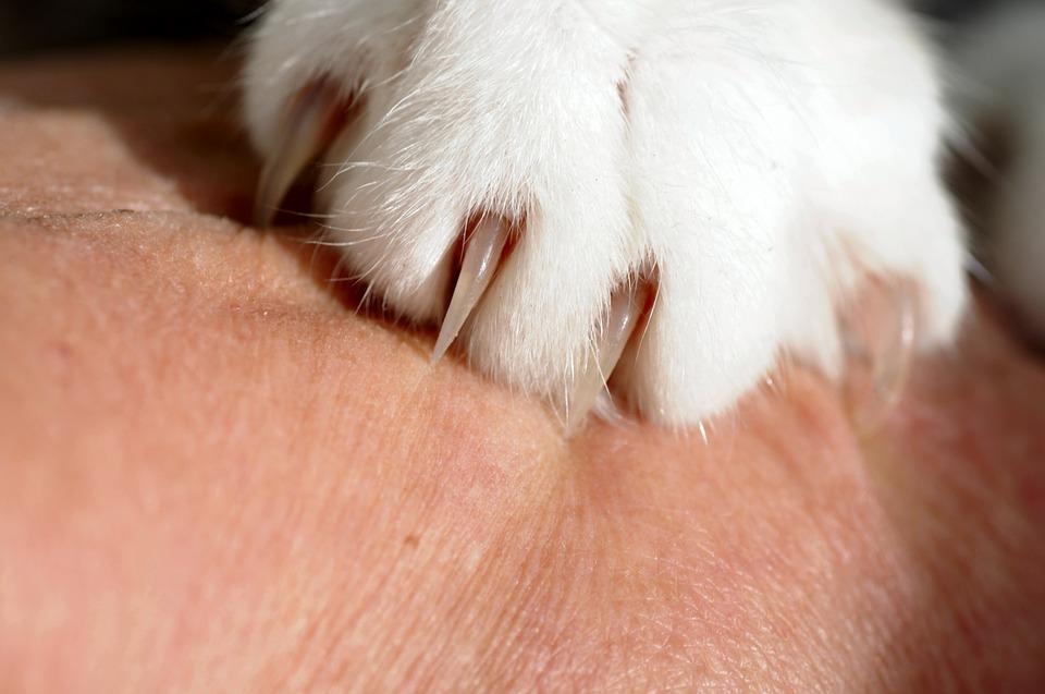 Khi bị mèo cắn bạn cần phải rửa vết thương bằng cách xả dưới vòi nước để trôi bụi bẩn