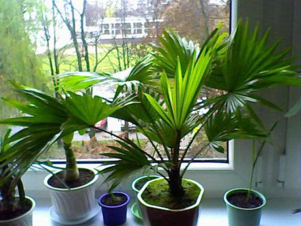 Loại cây nên để trong nhà để hút bức xạ wifi, lọc sạch không khí