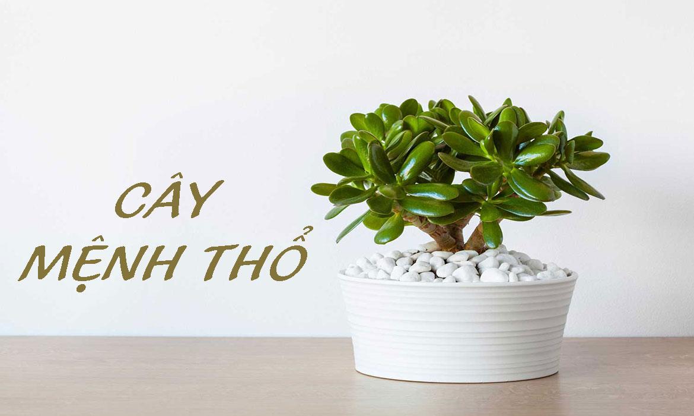 Người mệnh Thổ nên trồng cây gì trong nhà để thu hút tài lộc?