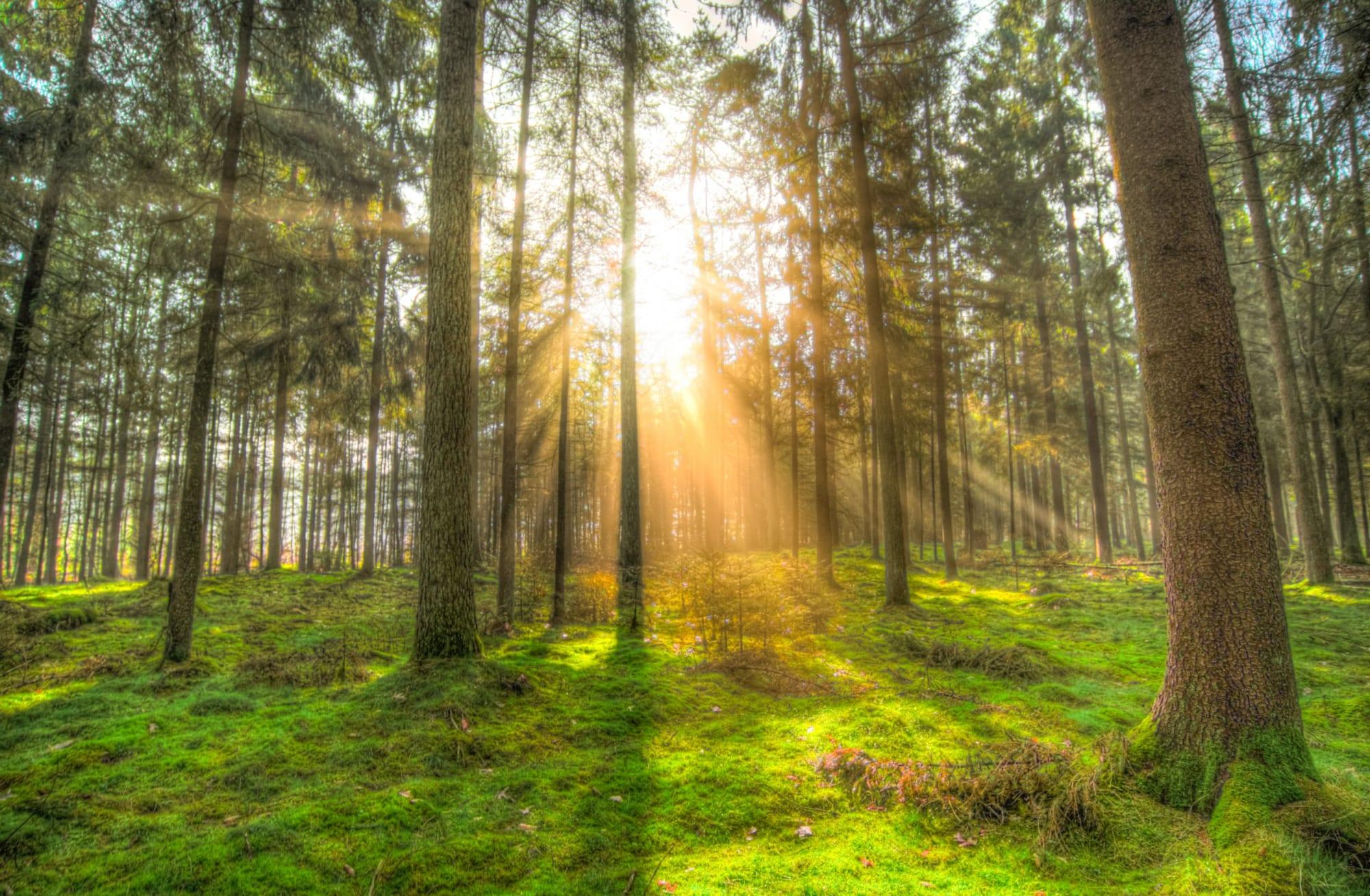 Tắm rừng - Liệu pháp giúp giải tỏa căng thẳng và lo âu của người Nhật
