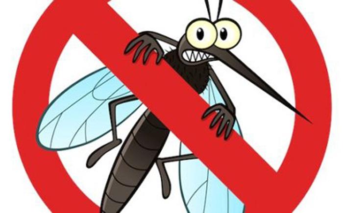 5 cách đuổi muỗi cực kỳ đơn giản mà lại an toàn ai cũng nên biết