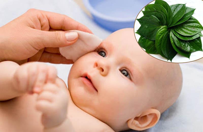 5 loại lá tắm dân gian dễ tìm và an toàn cho bé mẹ nên biết