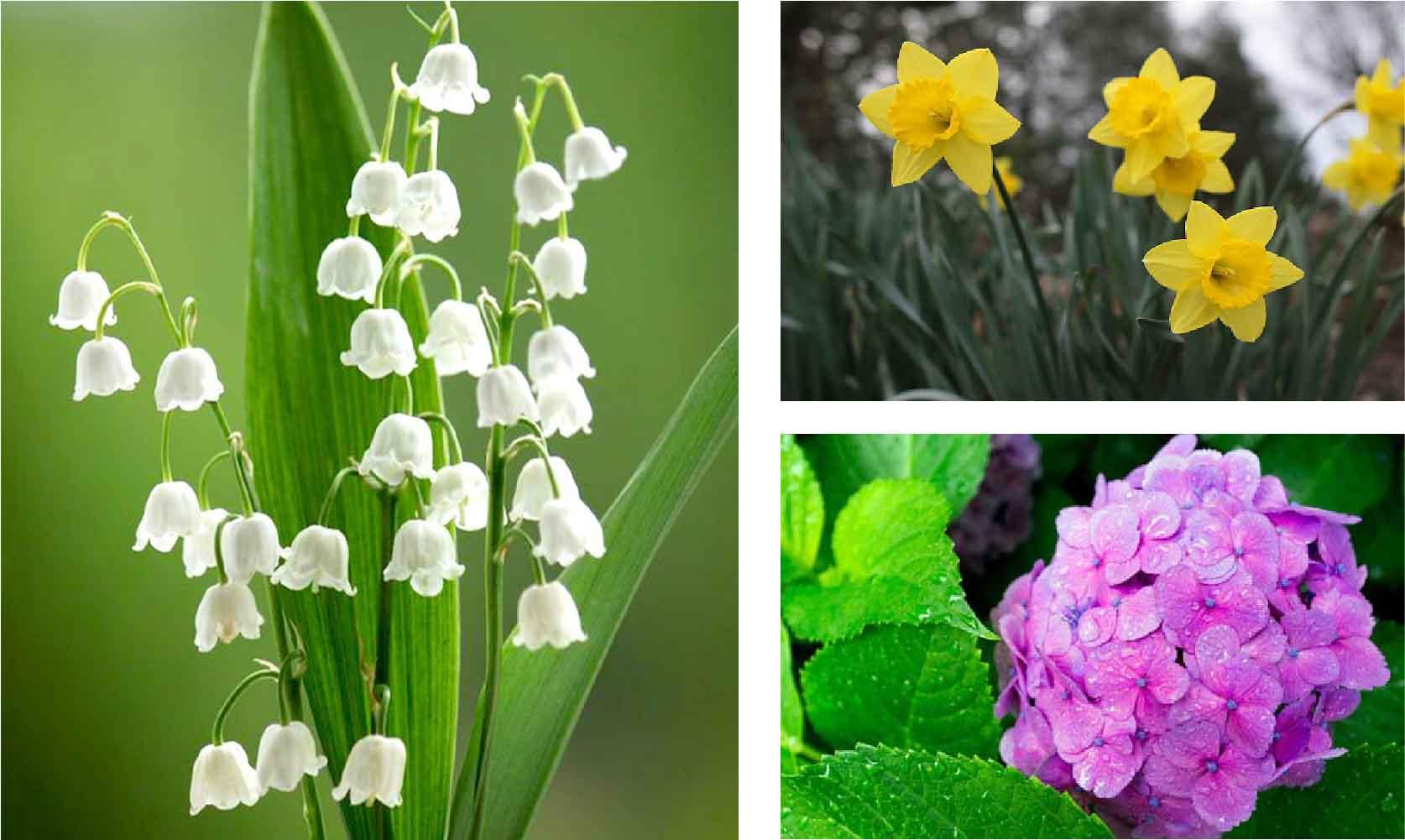 8 loại hoa mẹ bầu không nên tiếp xúc trong suốt thai kỳ