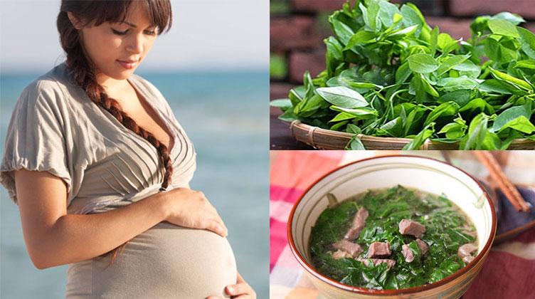 Bà bầu ăn rau ngót gây co bóp tử cung, dễ sảy thai?