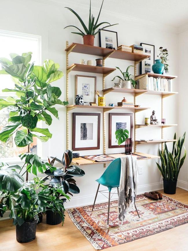 Mẹo trồng cây trong nhà và cách chăm sóc hiệu quả