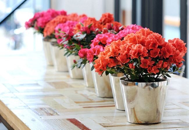 Những loại hoa hút tài lộc, may mắn nên bày ở phòng khách