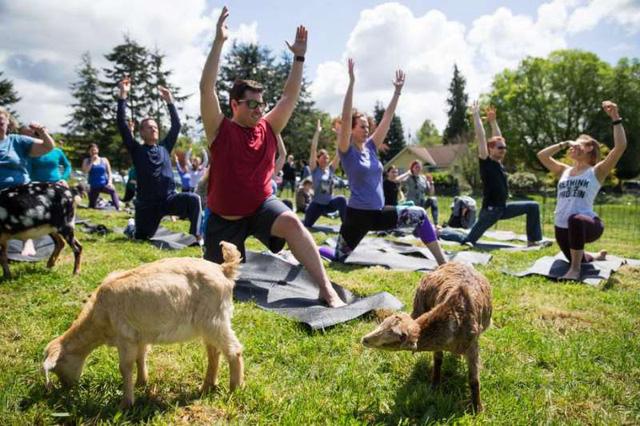 yoga de