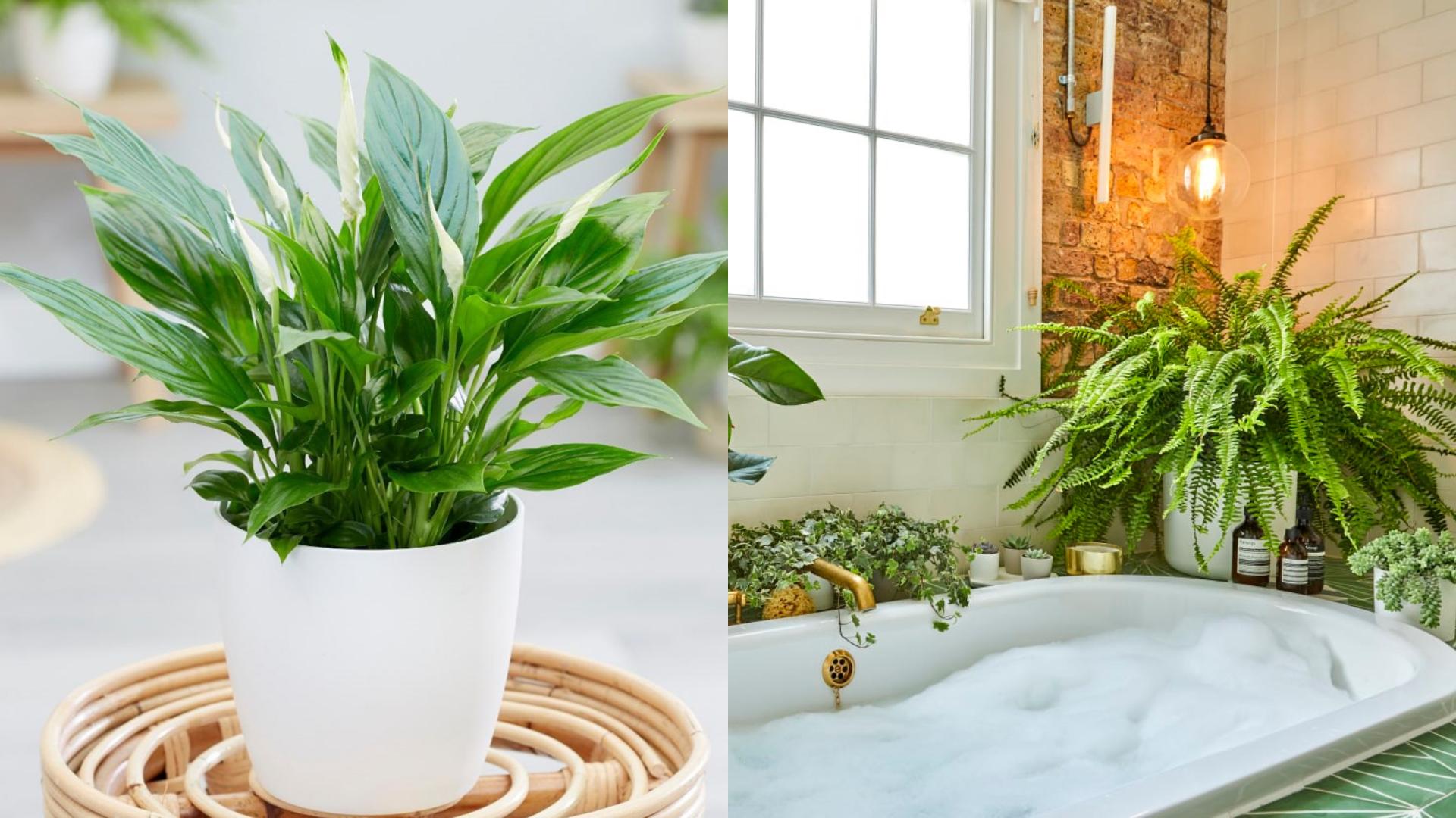 Mẹo hút ẩm không khí chỉ với 7 loại cây xanh trồng trong nhà này!