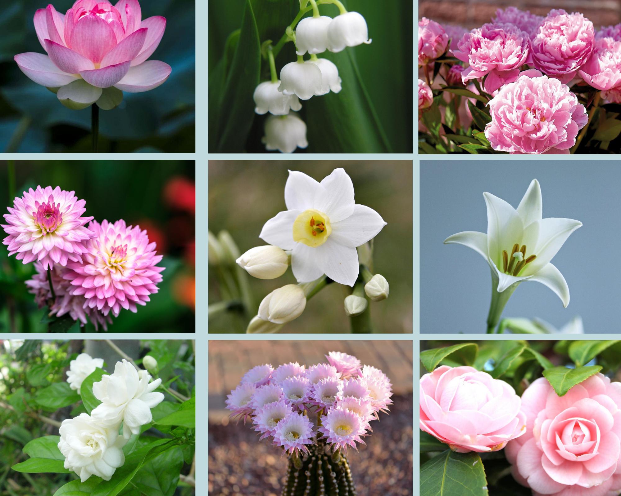 Tháng sinh tiết lộ bạn là hiện thân của loài hoa nào?