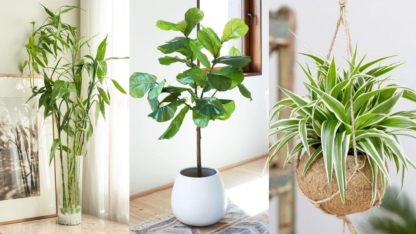Top 5 loại cây trồng trong nhà dễ chăm sóc, nâng cấp không gian sống