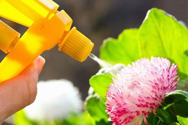 Tận dụng sữa hết hạn để chăm sóc cho cây trồng tại nhà, tưới một chút cũng khiến lá căng bóng, hoa nở tung