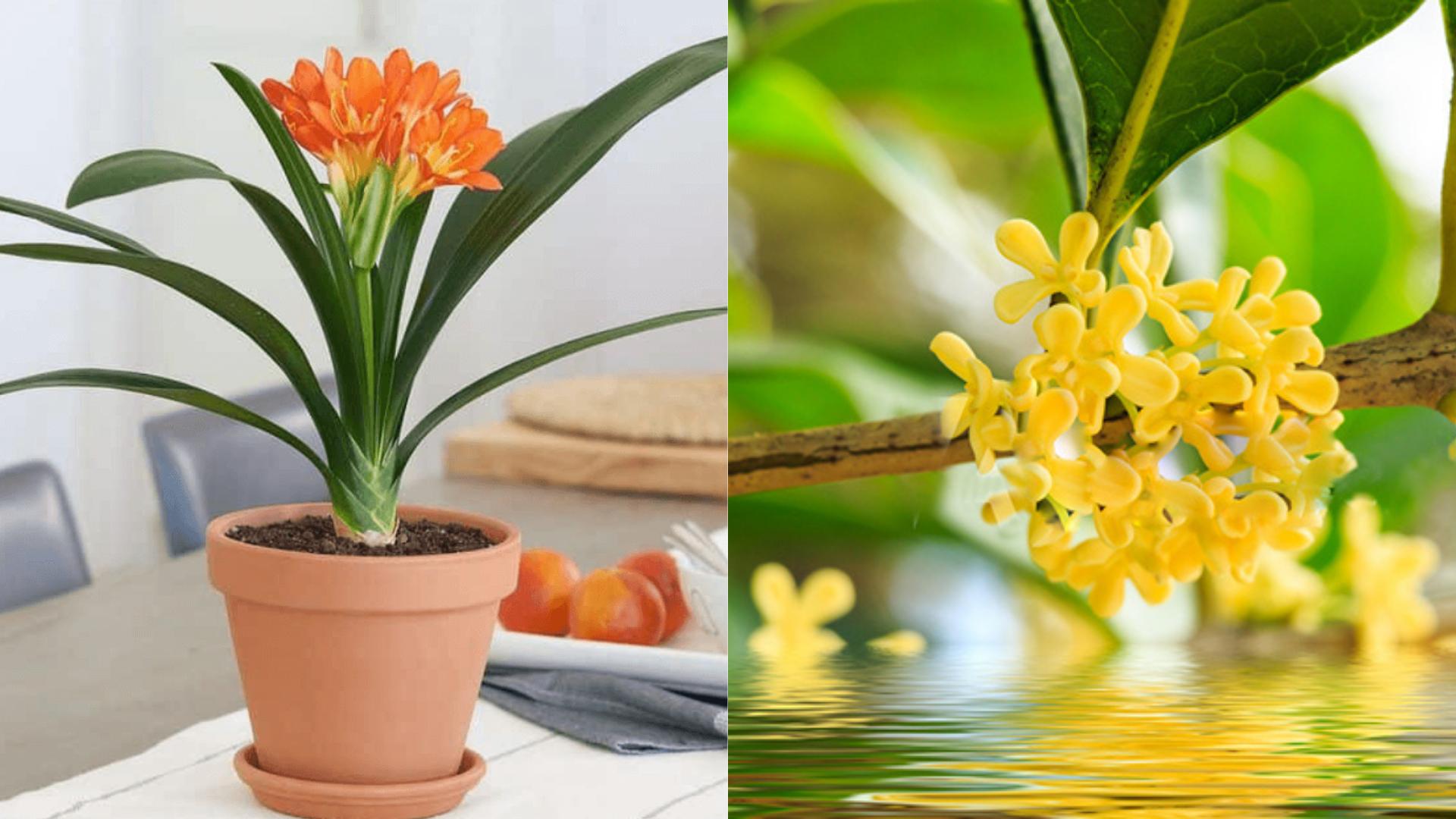 Top 3 loài hoa phong thủy mang vinh hoa, phú quý đến cho gia chủ