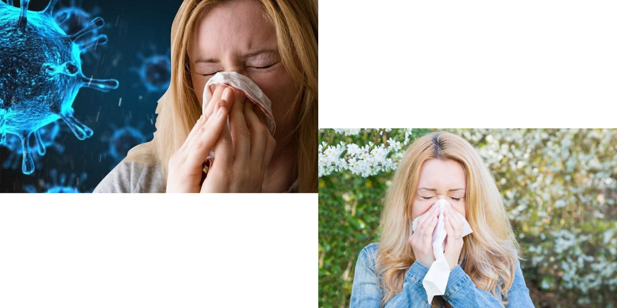Mách bạn cách phân biệt các triệu chứng giữa Covid-19 và dị ứng theo mùa dễ nhầm lẫn